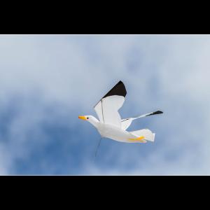 Seagull Kite 3D - Drache
